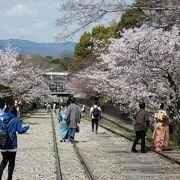 美しい傾斜鉄道跡の桜並木