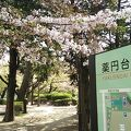 春先は花見気分で東屋や菖蒲園周辺を散歩したり運動を楽しめます