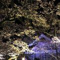 ピンクの桜がとても素敵でした、日本桜名所の1つとしてさすがと思いました、お勧めします