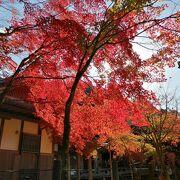 紅葉がきれいでした