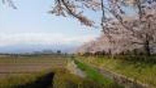 荒川桜づつみ公園