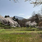 桜の絶景 in秩父