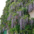 素晴らしい花の美術館