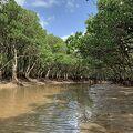 日本で2番目に大きいマングローブの森