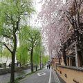 桜も柳も風情があります