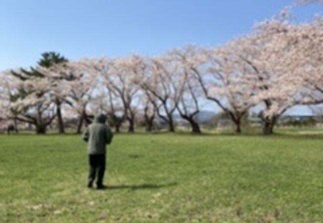 桜のきせつがオススメ