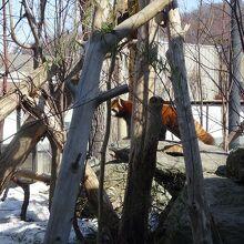 円山動物園 アジアゾーン 高山館