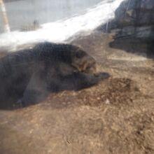 円山動物園 エゾヒグマ館