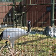 円山動物園 総合水鳥舎