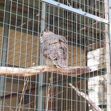 円山動物園 フクロウとタカの森