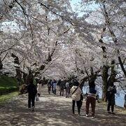 桜のワンダーランド