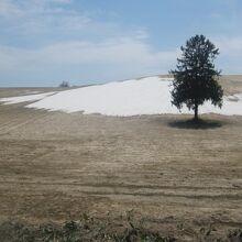 残雪を背景に、一日も早い本格的な春の到来を願いました。