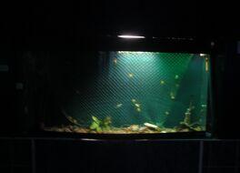 バイカル湖博物館