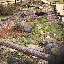 六甲高山植物園