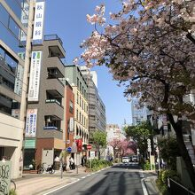 関内桜通り