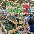 島野菜がいっぱい