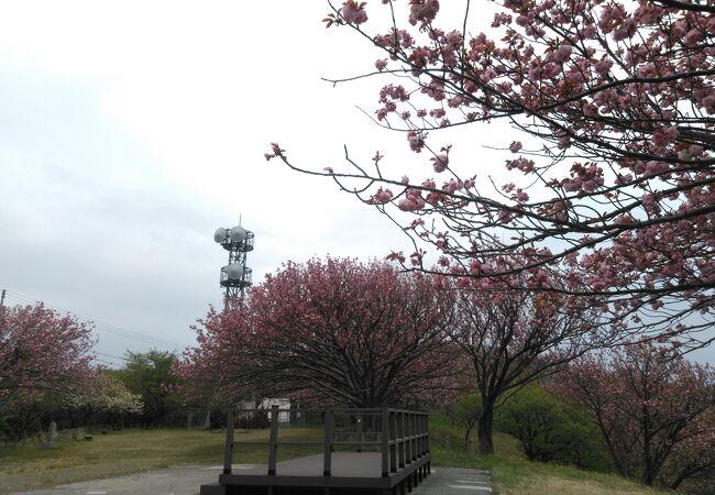 諸上寺公園