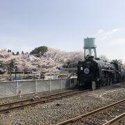 屋外エリアは桜が綺麗でした