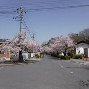 長瀞に行くまでの桜並木