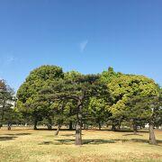 芝生と木々