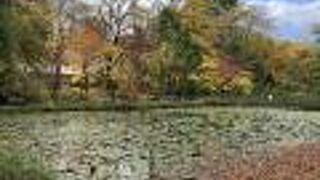 北海道大学の大野池