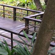 南海学園 台北植物園