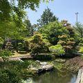 素敵な日本庭園を眺めながら美味しい食事を頂きました‼