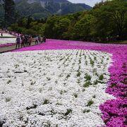 芝桜の季節は GO!