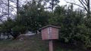 家康公お手植えのミカンの木