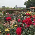 薔薇が咲く季節は特にお勧め