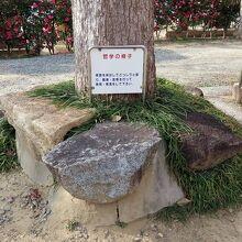 哲学の椅子 (愛染堂勝鬘院)