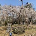 伏姫桜を見にまた行きたいお寺です。