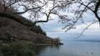 桜の絶景ポイントです。