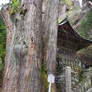 榛名神社 矢立杉