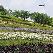 ネモフィラや様々花を楽しめる馬見丘陵公園