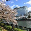 桜並木が川の両岸を彩ります