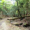 森林浴を楽しみながら歩いていく