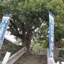 山王神社の大クス