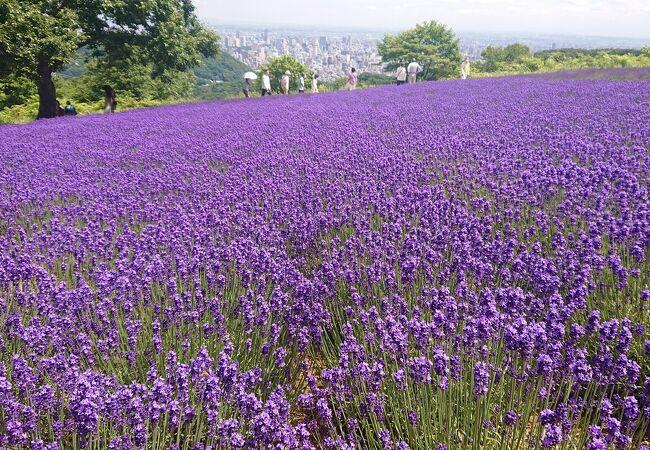 札幌の絶景スポットに行くには