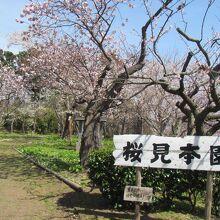 松前町桜見本園