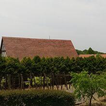 ブドウ畑と建物の裏側からの風景