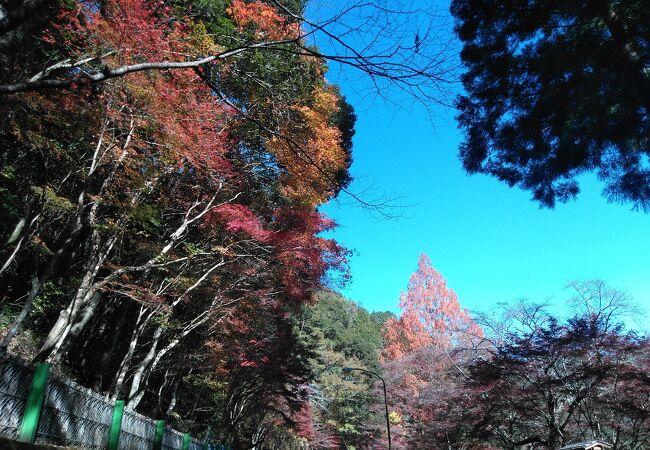 紅葉がきれいな森