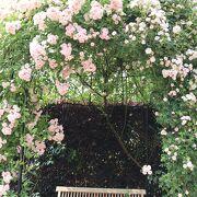 薔薇の季節がおススメ