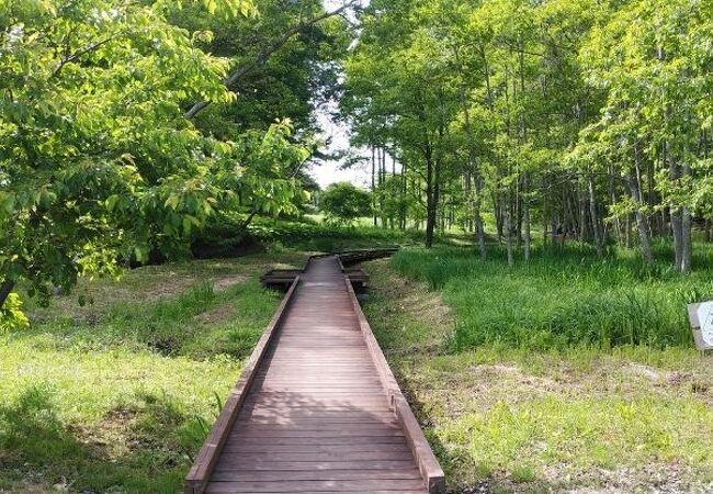水生植物がみられる水辺の環境豊かな公園