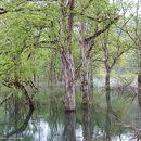 白川湖岸公園
