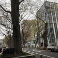 府中駅の大通りの並木道ですが、由緒ある