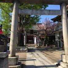 飛木稲荷神社のいちょう
