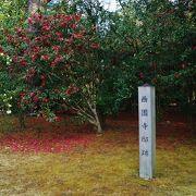 西園寺邸宅跡地には山茶花の木が鮮やかな花を咲かせていました。