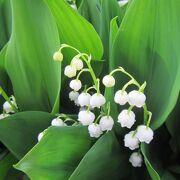 花は5月下旬がおススメ