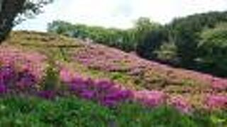 古代出雲王陵の丘